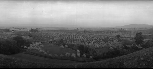 Panoramic_landscape_of_orchards_in_Santa_Clara_Valley